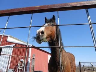 Moving North Star Horsemenship Day 2- Horses Settling (23)