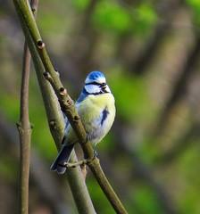 chickadee(0.0), green jay(0.0), jay(0.0), animal(1.0), branch(1.0), fauna(1.0), finch(1.0), bluebird(1.0), beak(1.0), bird(1.0), wildlife(1.0),