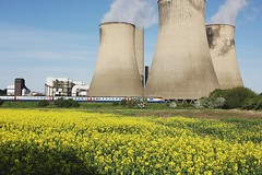 flower, field, rural area, power station, nuclear power plant,