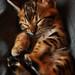 Tiger, Tiger by Mark Liddell