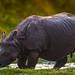 C H I T W A N - Népal, Wild Rhino by Alexandre Carpentier