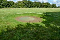 Strange pond with daisy circle