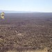 Sonoran Desert spring butterfly hilltopping