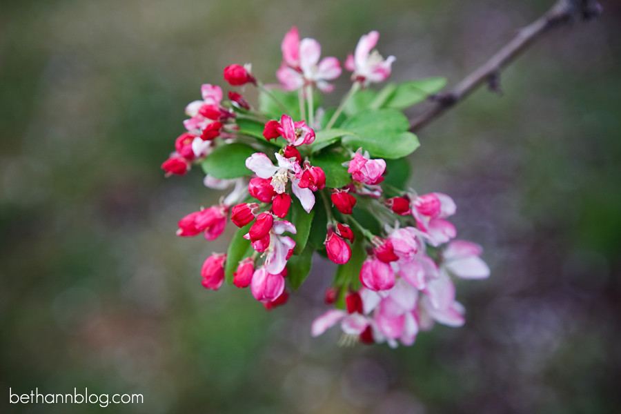 photos of spring blossoms