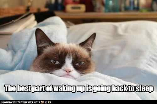 The Funny Cat Photos