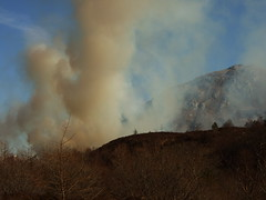 Highland Forest Fire on Ardnarmurchan near Strontian