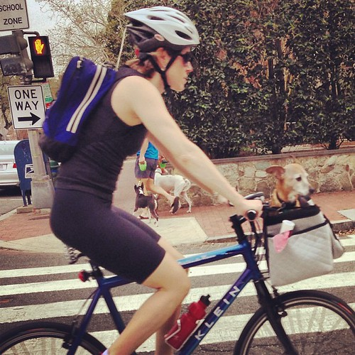 Woman riding with dog