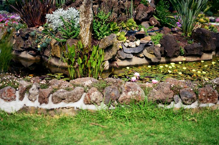 lily pond a