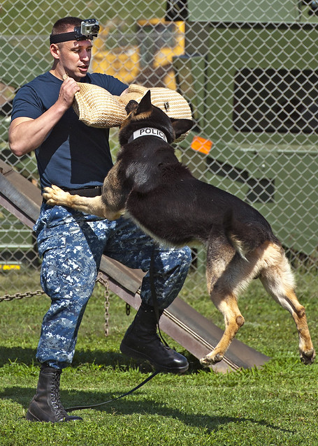 Image Result For Dog Training Aggression