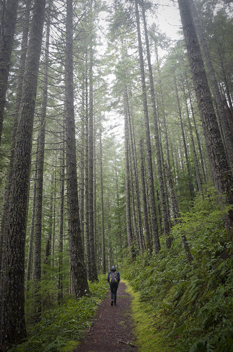 county trees abandoned water oregon creek forest waterfall woods mine hiking marion falls mining opal shafts shaft elkhorn henline