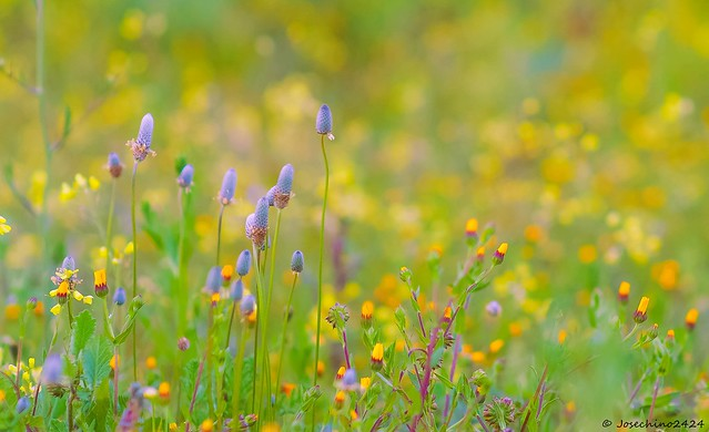 Primavera en la cuneta