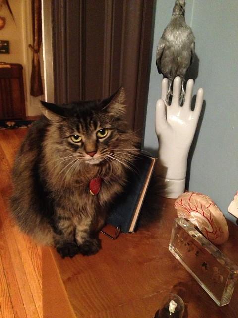 Grumpy Cat Birthday Card Free