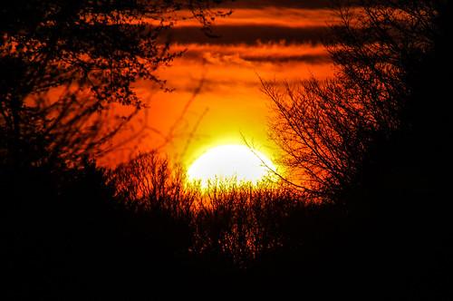 france soleil branches coucher crépuscule forêt nord mormal locquignol