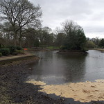 Disaster for wildlife at Tunstall Park Lake