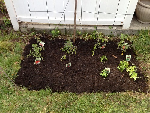 Tomatoes (6 different types), basil, lemon basil, cilantro, jalapeño peppers