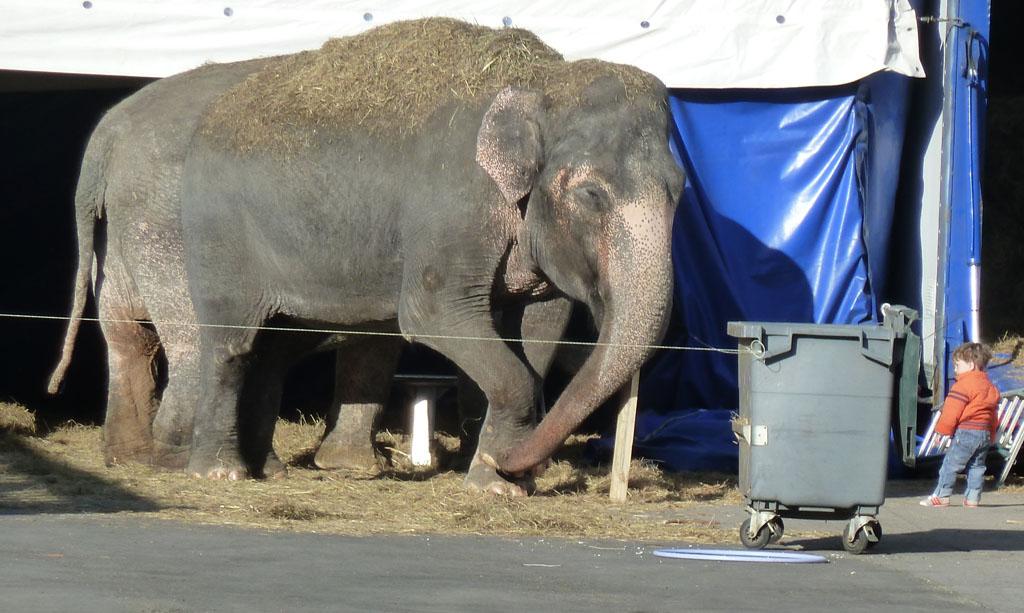 Минск 1 мая 2013 слон 3