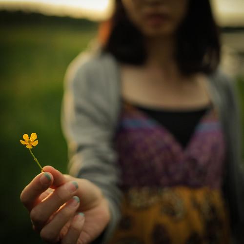 sunset flower film canon square sweden bokeh grain 40mm 花 sommar ぼけ スウェーデン ultron ボケ voigtländer 開放 cv40 canon5dmark2 粒子 voigtländerultron40mmf2 kennethsvedlundishii