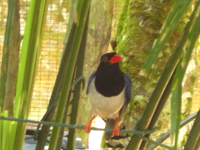 Taiping Zoo IMG_5776