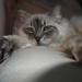 Small photo of Willa in repose