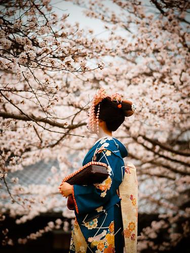 [フリー画像素材] 人物, 女性 - アジア, 人物 - 花・植物, 日本人, 芸者・舞妓, 和服・着物:浴衣, 桜・サクラ ID:201304051800