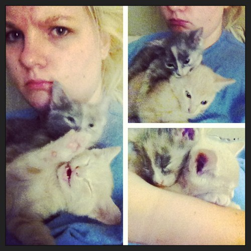 #picstitch #earlymorning #fighting #kitties #sleepy #5secondslater seriously these were all taken less than 30 seconds apart! #narcoleptickitties