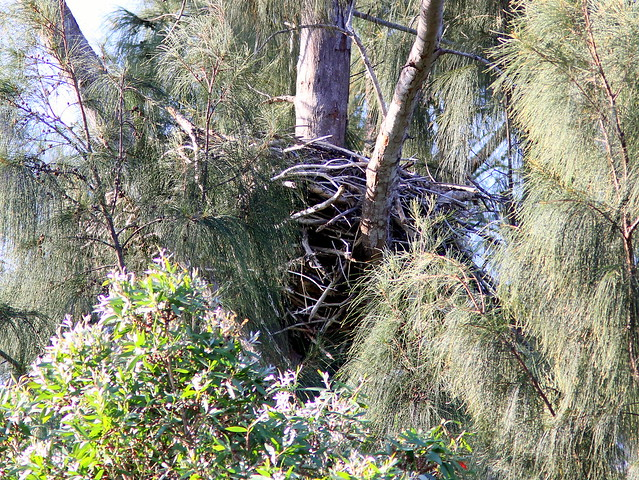 Bald Eagle nest empty 20130406