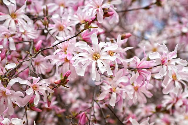 Spring flowers in Milan
