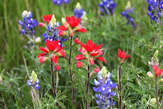 3-28 Wildflowers