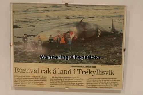 4 Icelandic Phallological Museum - Reykjavik - Iceland 13