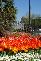 istanbul tulip festival 2013
