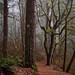 mysterious woods by kiowas