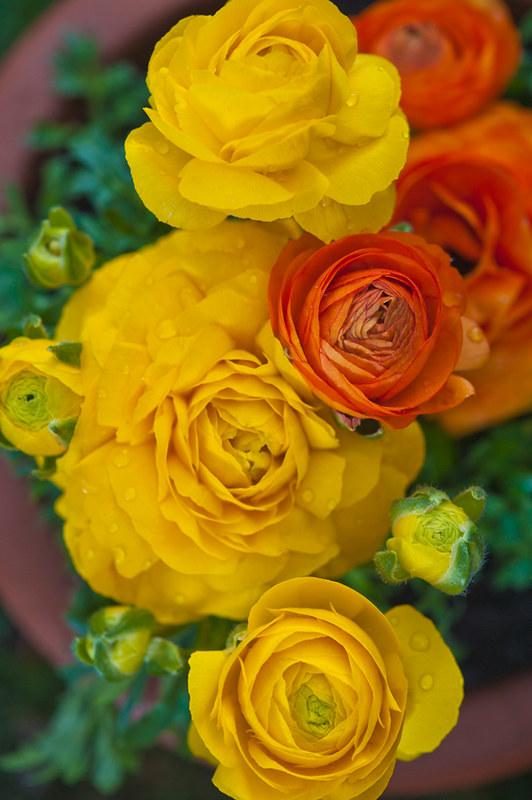 fiori_42