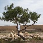 Tree in Castle Alicante