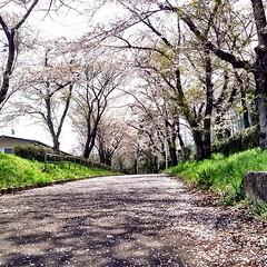 宮城県仙台第二高等学校