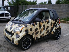 cheetah animal print smart car IMGP0418_full