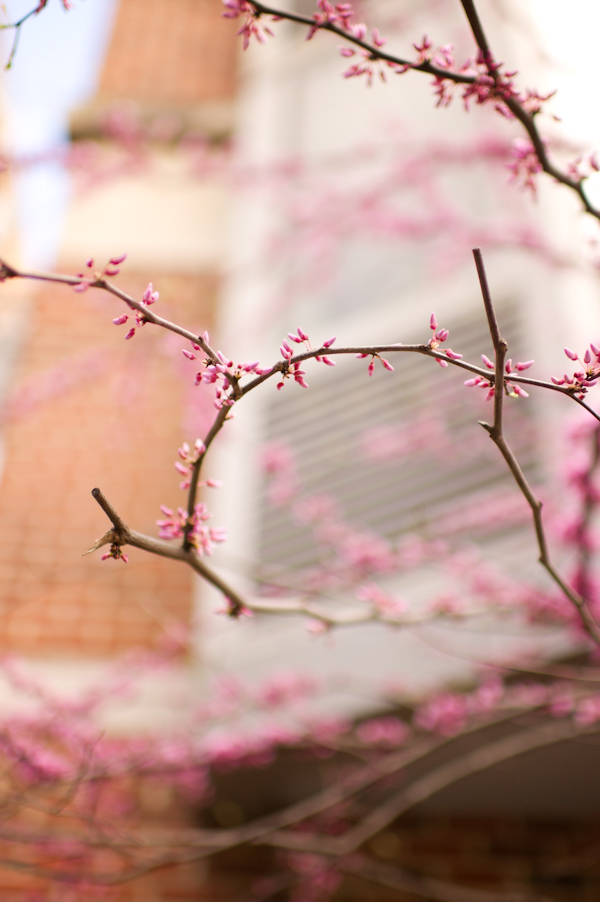 RYALE_Spring-3