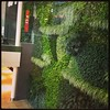 Living wall at the EIA.