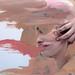 Skin by Rosanna Jones