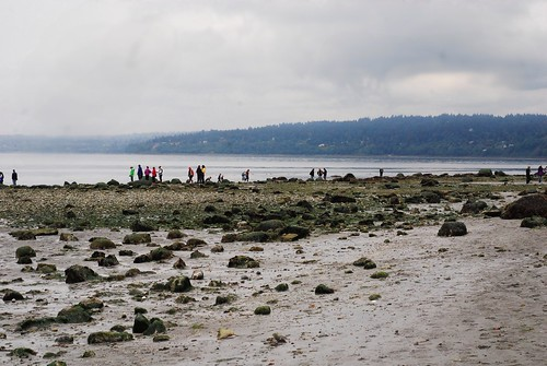Golden Gardens Low Tide