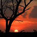 Sunset Jonathan Dickinson State Park by bmeyers (read profile)