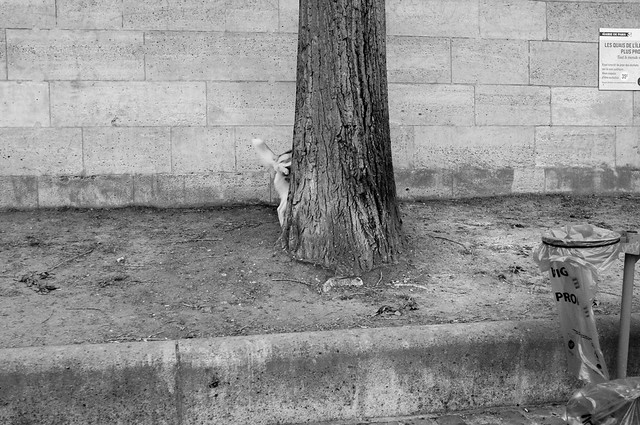 Un chien et son arbre