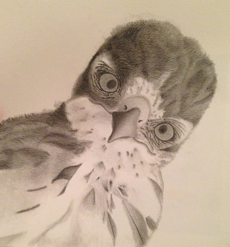 graphite pencil drawing by my daughter