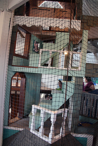 Stairs-in-cat-house