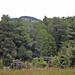 Crow Hut Leslie - Karamea  Track