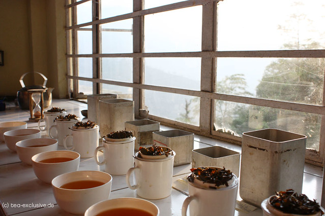 Tea Tasting, Steinthal Tea Garden