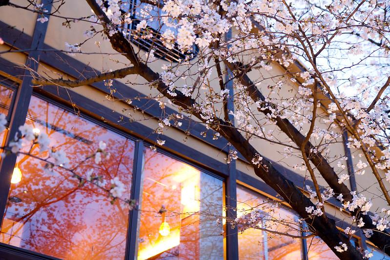 Sakura in Kyoto 42