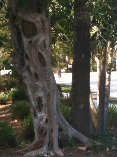 Strange tree trunk