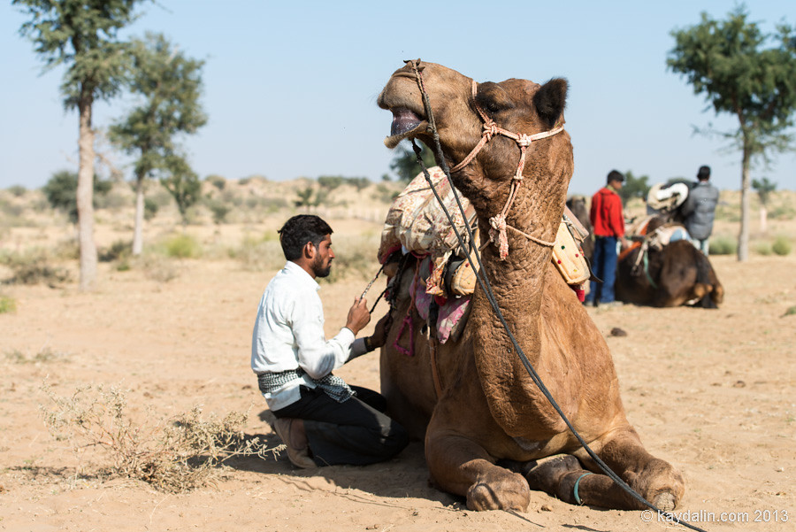 наездник верблюдов