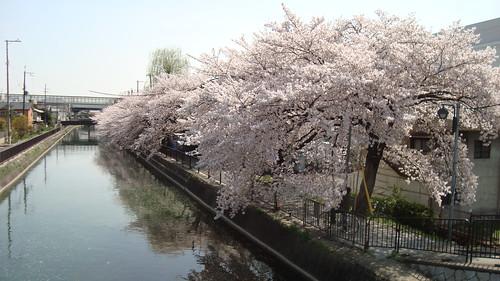2013/04 深草 琵琶湖疏水 #03