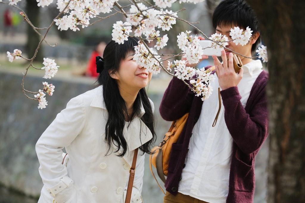 Цветок сакуры школа японского